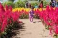 taman bunga ambal