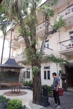 pohon tanjung