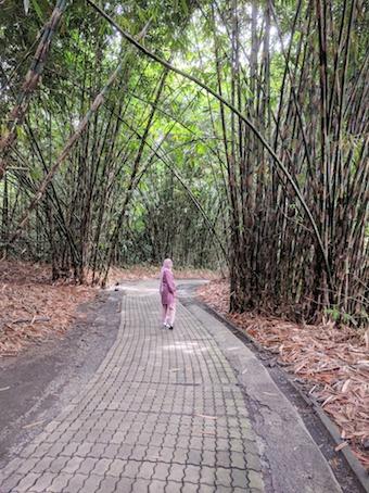 hutan bambu panglipuran