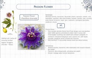 Manfaat passion flower