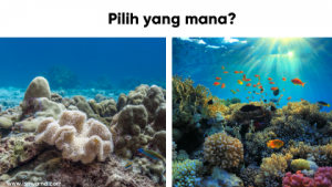 Terumbu karang rusak
